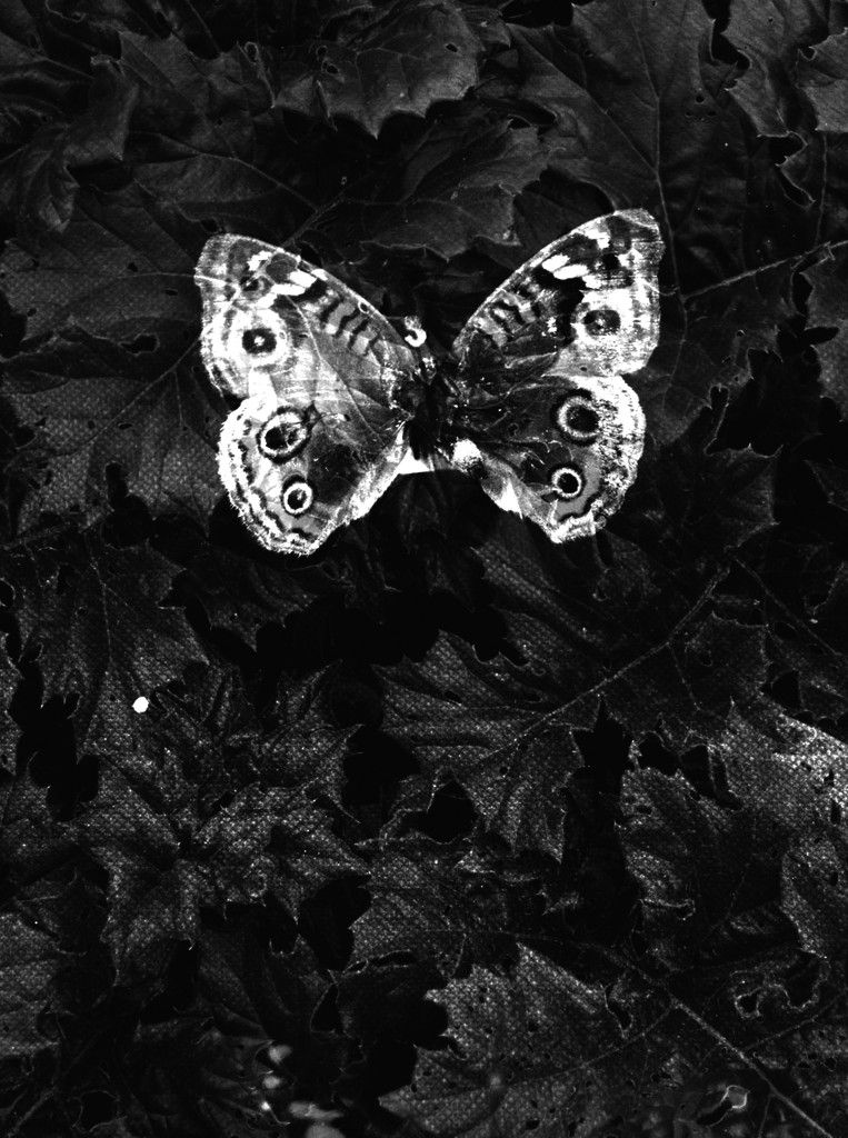 Fantasmagorías: Mariposa. Laura Jimena Ortiz.